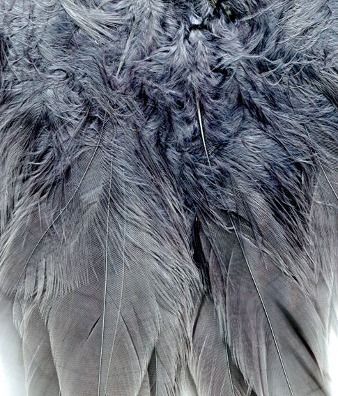 Free Textures - Hi-Res Fur And Feather Textures