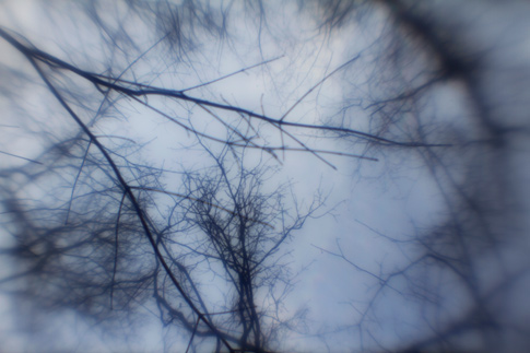 Free Textures From Bittbox: Surreal Tree Branches